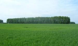 Лесопосадка около д.Красный Вал
